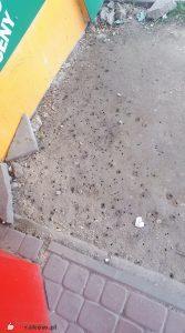 Kolonia porobnic koło przystanku. Widoczne na zdjęciu dziurki to wejścia do gniazd. fot. Justyna Kierat