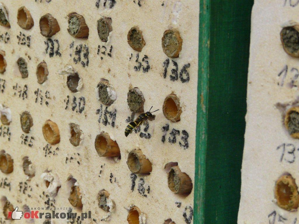 osa 300x225 - Jeżeli wyginą pszczoły, ludzkość będzie miała spore kłopoty...