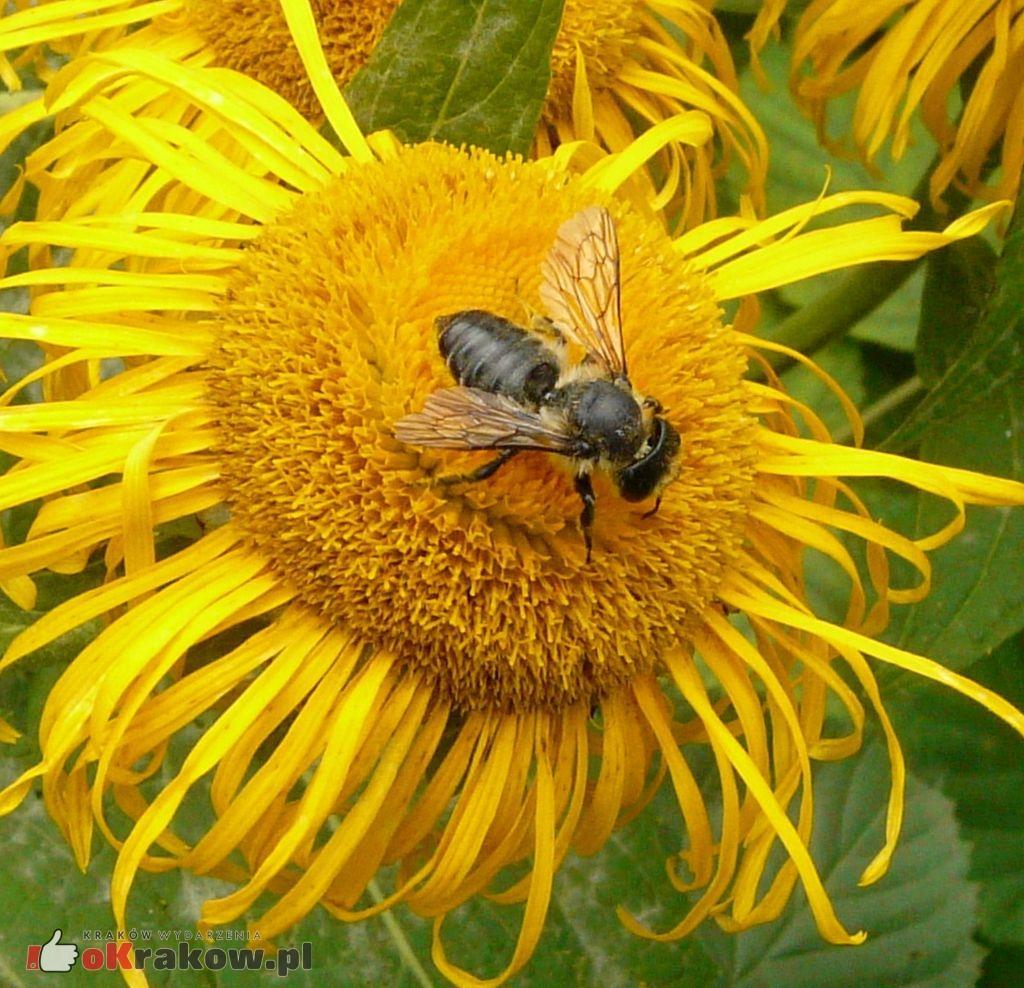 Jeżeli wyginą pszczoły, ludzkość będzie miała spore kłopoty…