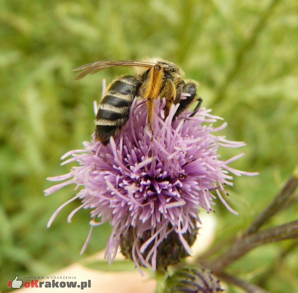 pszczolinka 150x150 - Jeżeli wyginą pszczoły, ludzkość będzie miała spore kłopoty...