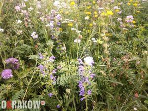 Barwne kwiaty wabią owady zapylające i dostarczają zróżnicowanego pożywienia