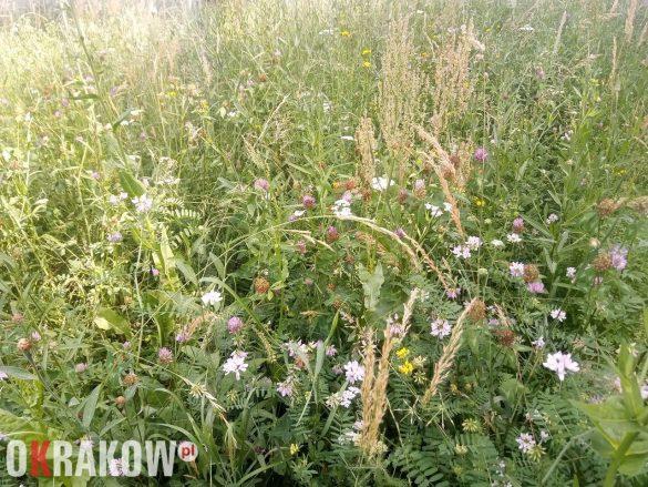 Łąki mają wielowiekową historię