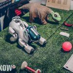 wystawa robotow galeria krakowska krakow 2019 13 150x150 - Robopark – inwazja robotów w Krakowie
