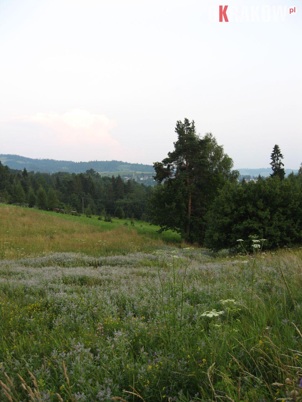 tajemniczy wieczor na gorskiej lace pelnej miety 225x300 - Z kupieckich szlaków na krakowskie balkony – o miododajnych ziołach i przyprawach