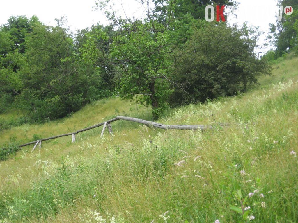 wiele ziol rosnie dziko w murawach kserotermicznych 300x225 - Z kupieckich szlaków na krakowskie balkony – o miododajnych ziołach i przyprawach