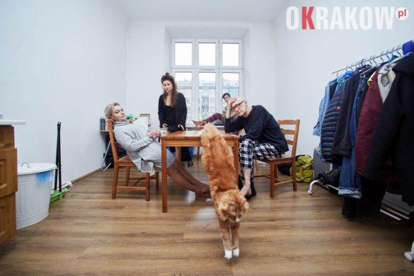koty-teatr-krakow (1)
